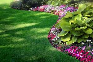 lawn-hostas (300x202, 16Kb)