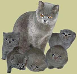 И внешний вид мне нравится. фотография взята отсюда. описанию. коты, кошки и котята.