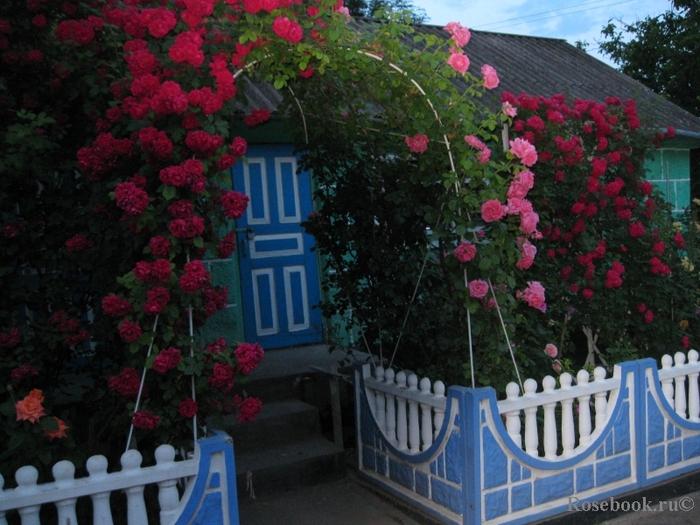 забор с розами (700x525, 303Kb)