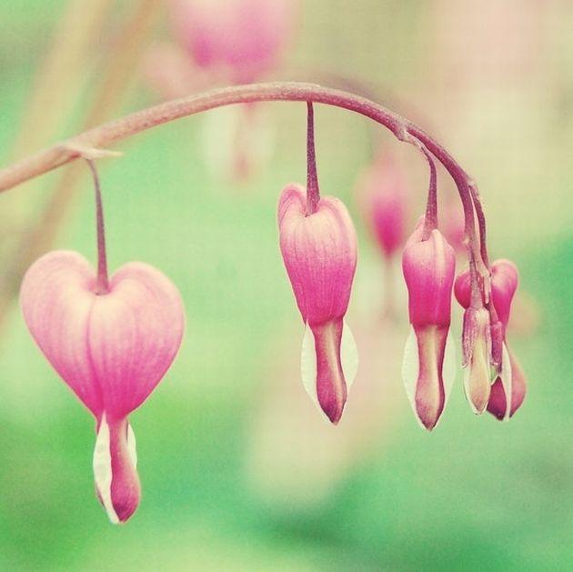 Картинки другие с природой с сердечками