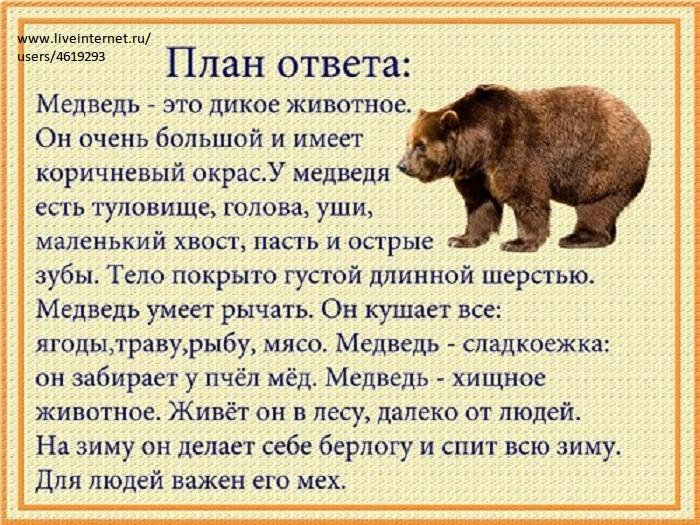 Расскажи - ка - схема рассказа про диких животных.