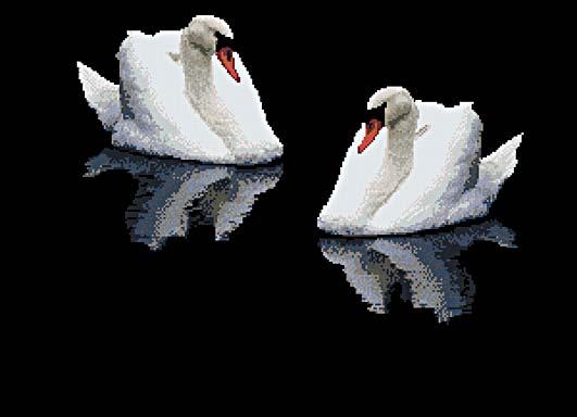 Два лебедя - лебеди - птицы