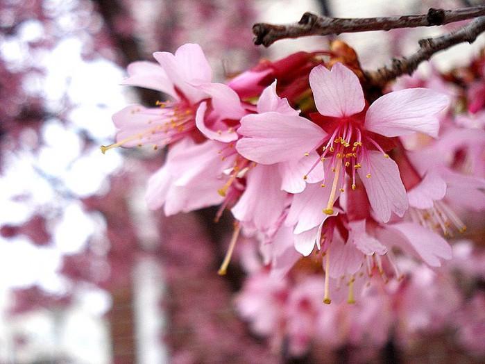 2835299_spring_flowers_01_1 (700x524, 99Kb)