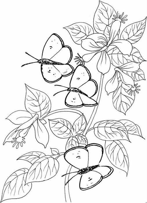 Бабочки и цветы картинки раскраски 5