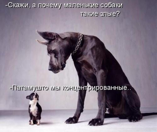 4821332_1298498091_32 (500x422, 41Kb)