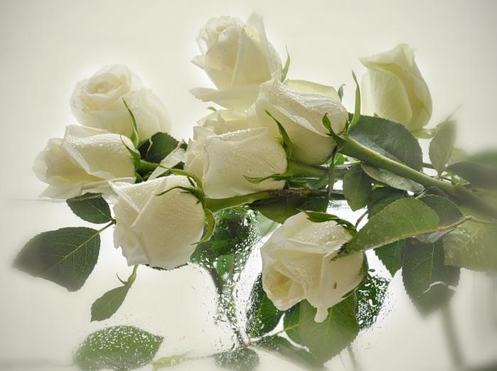 Белые розы (фото). Обсуждение на LiveInternet ...: www.liveinternet.ru/users/wifeyyy/post212005137