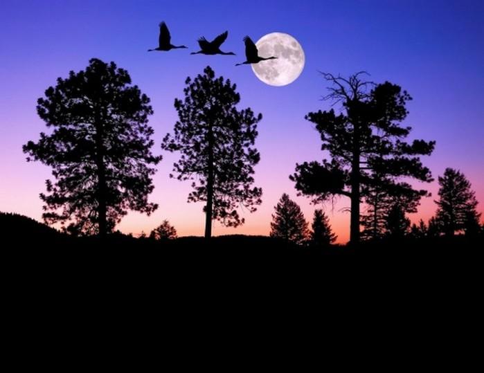 Как фотографировать ночное небо - полезные советы и примеры 6 (700x539, 66Kb)