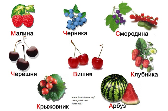ягоды картинки и названия для детей