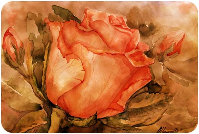 роза (640x430, 113Kb)