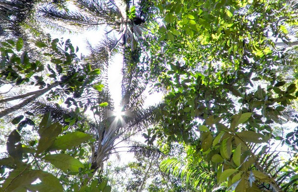 3925073_rainforestview2 (600x387, 132Kb)