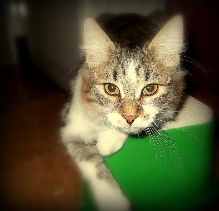 кот кошка котЭ (700x674, 346Kb)