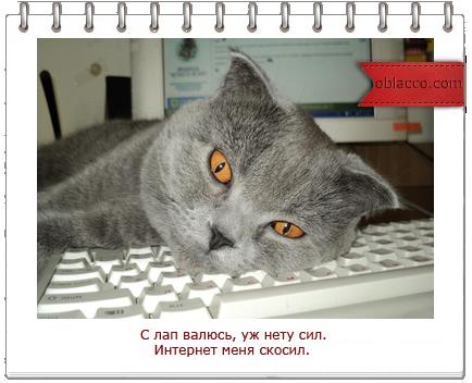 кошки и интернет