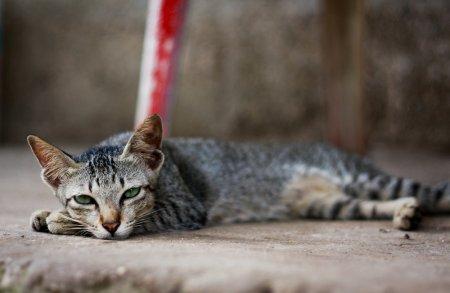бездомная кошка (450x293, 20Kb)