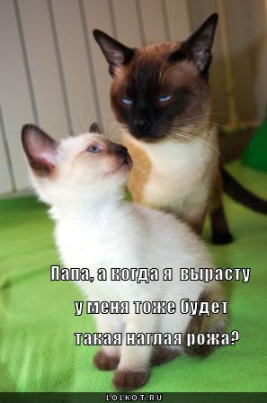 """Фото-галерея. альбом """"Сиамская кошка """""""