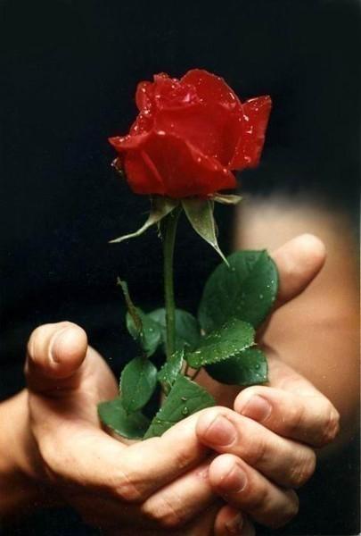 роза (405x600, 43Kb)