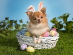 ������ Bunny-Wishes-Happy-Easter-Wallpaper (700x525, 267Kb)