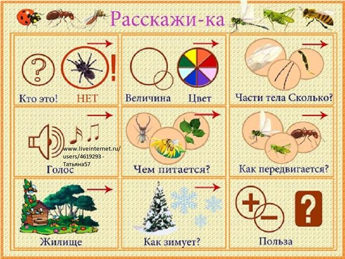 насекомые (700x525, 187Kb)