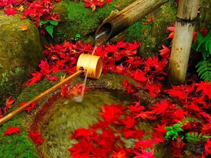 Японский сад фото 3 (700x525, 125Kb)