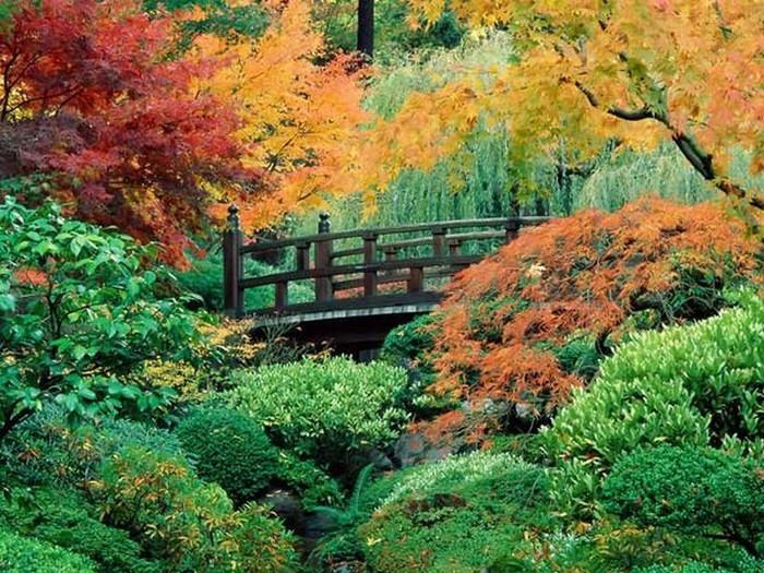 Японский сад фото 18 (700x525, 164Kb)