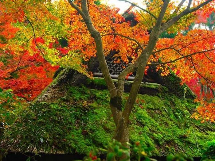 Японский сад фото 20 (700x525, 158Kb)