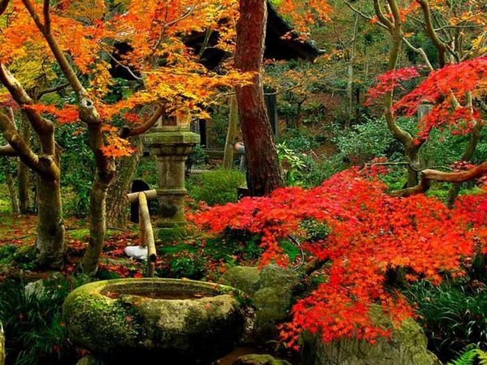 Японский сад фото 22 (700x525, 157Kb)