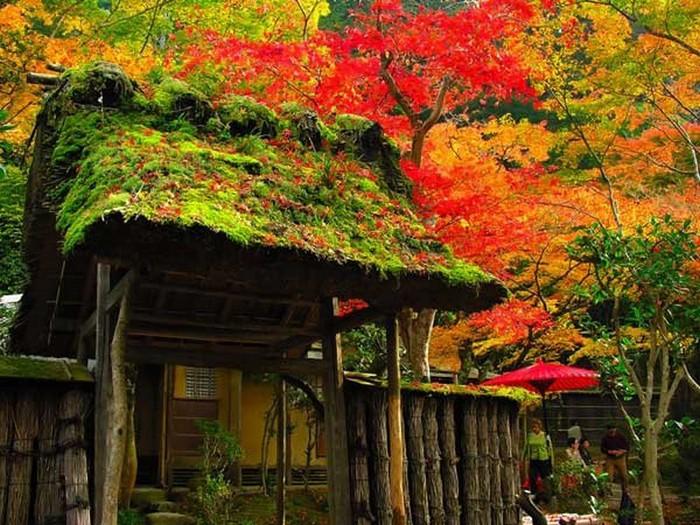Японский сад фото 49 (700x525, 145Kb)