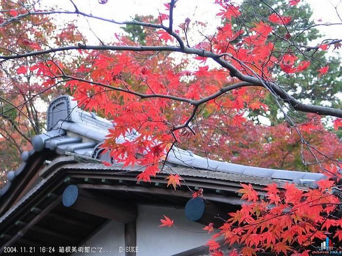 Японский сад фото 55 (700x525, 155Kb)