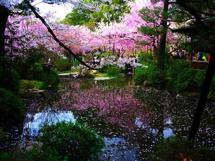 Японский сад фото 77 (700x525, 151Kb)