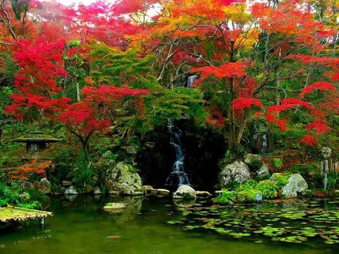 Японский сад фото 85 (700x525, 142Kb)