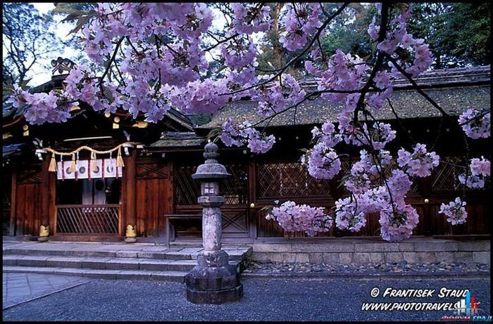 Японский сад фото 87 (700x461, 153Kb)