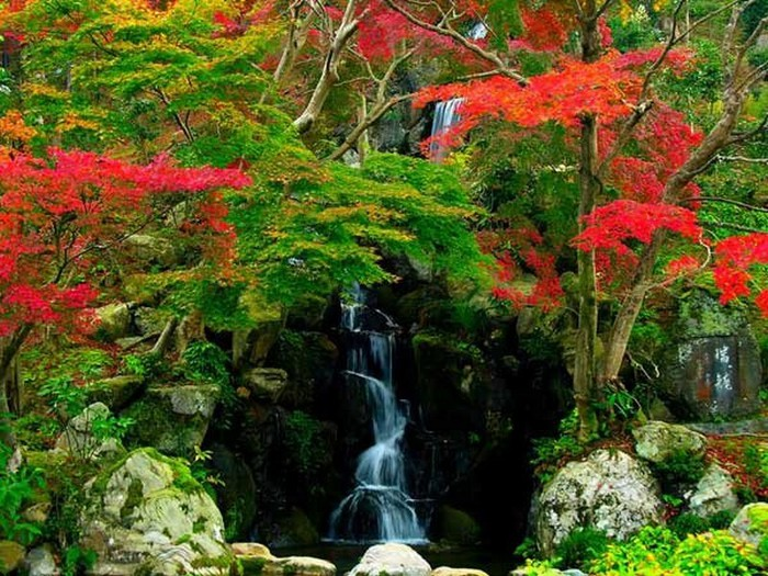 Японский сад фото 92 (700x525, 148Kb)