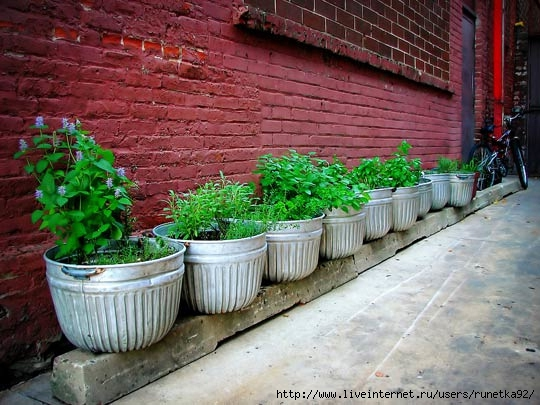 167-herb-garden-in-raised-metal-buckets_rect540 (540x405, 169Kb)