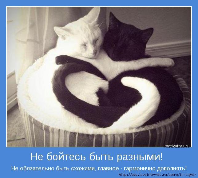 мотиватор любовь позитив 46 (644x579, 136Kb)