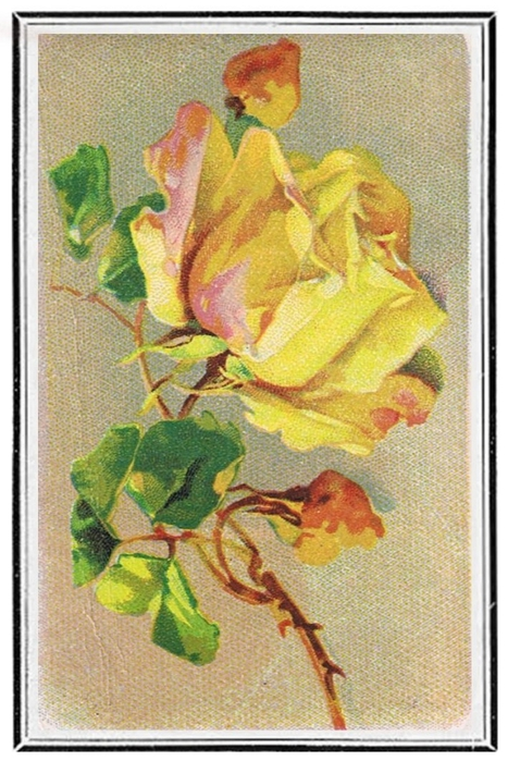 French sheet music and yellow rose tags4 (467x700, 281Kb)