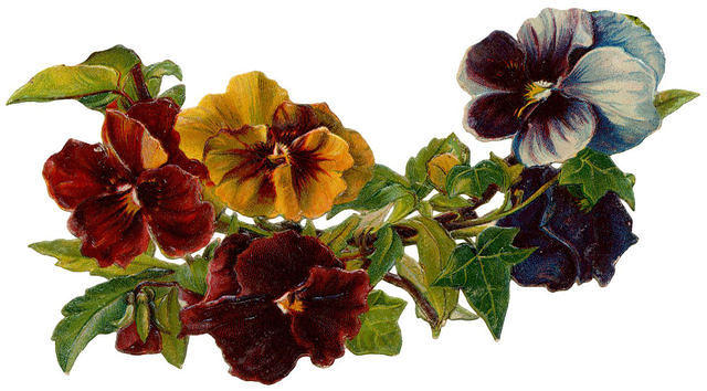 Flowers ~ pansies curve 2 (640x354, 56Kb)