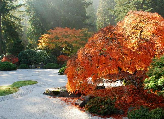 Японские сады в Портленде, США. (STEPHEN GRAY) (650x471, 183Kb)