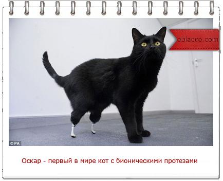 Оскар - первый в мире кот с бионическими протезами