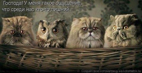 4765034_image001 (480x248, 29Kb)