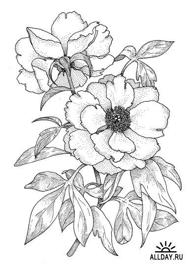 1244380606_flower56-kopiya (380x537, 50Kb)