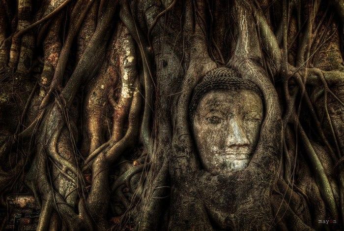 дерево и голова будды (700x469, 108Kb)