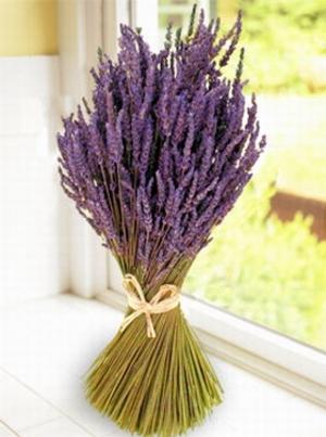 lavender (300x403, 86Kb)