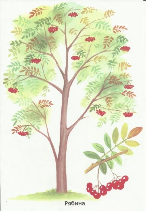 Деревья раскрась по образцу interesnoe