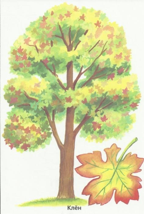 Раскраска деревья рябина