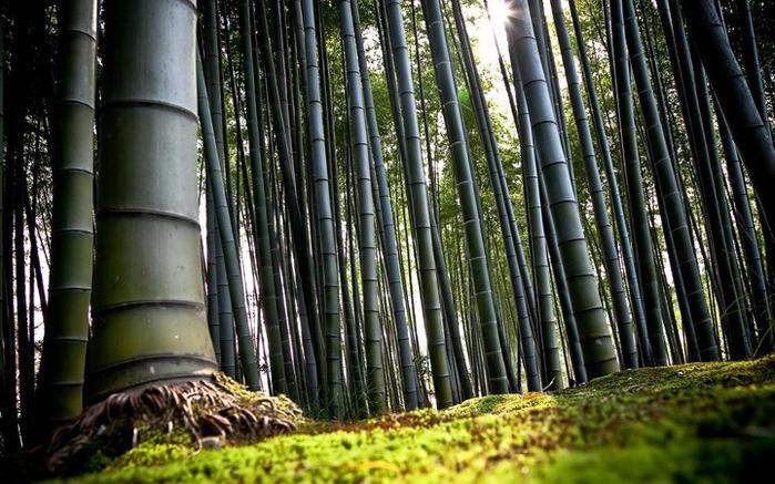 Bamboo_forest_digital_wallpaper_thumb (700x437, 131Kb)