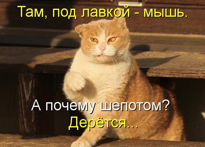 http://img1.liveinternet.ru/images/attach/c/5/85/397/85397723_zhivotnuye9.jpg