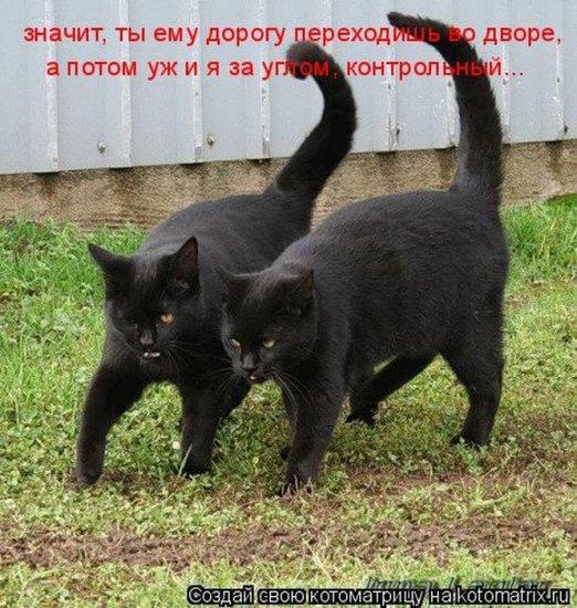 1306542598_1306477712_kotomatrix_17 (522x550, 89Kb)