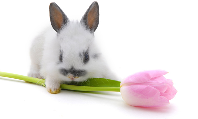 84441554_4278666_rabbitfactsphotos06 (640x386, 41Kb)