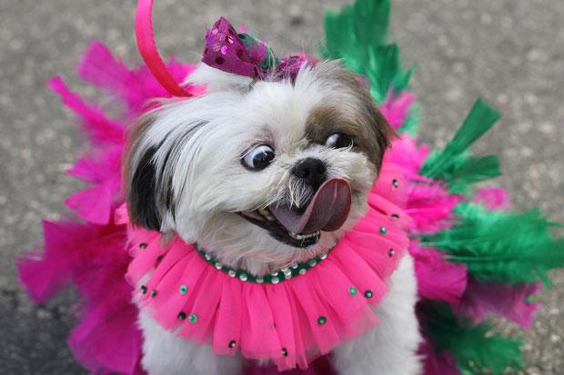 3925073_rio_carnaval_pets_creativing_net_001 (620x413, 51Kb)