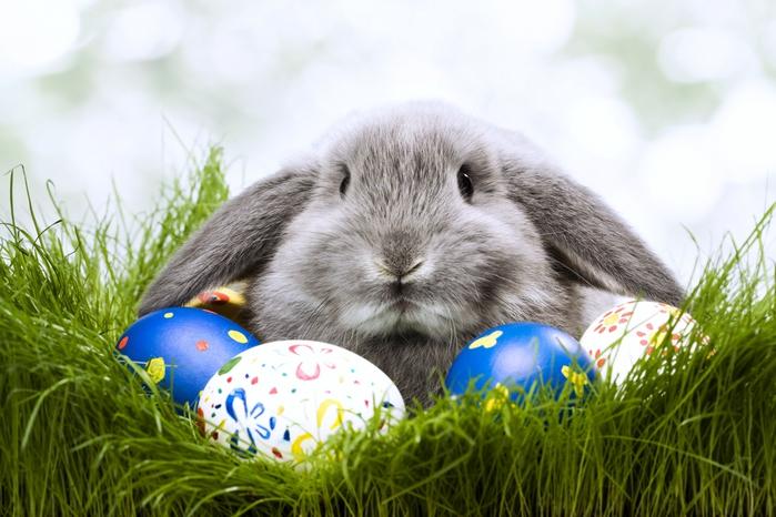 Кролик обои для рабочего стола. пасха обои для рабочего стола. яйца обои для рабочего стола.