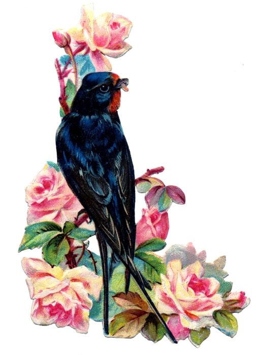 birds and flowers vintage image graphicsfairy4b (504x700, 185Kb)